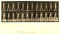 Animal locomotion. Plate 17 (Boston Public Library).jpg