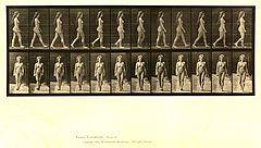 Animal locomotion. Plate 17 (Boston Public Library).jpg