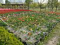 Ansan Lake Park Spring 2015 22.JPG