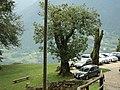 Antichi Castagni - panoramio.jpg