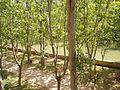 Aranda de Duero 29.JPG