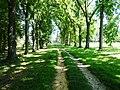 Arboretum - panoramio (3).jpg