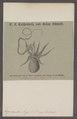 Argonauta argo - - Print - Iconographia Zoologica - Special Collections University of Amsterdam - UBAINV0274 090 01 0005.tif