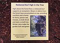 Armstrong Redwoods State Natural Reserve - Redwood Burl High in the Tree.jpg