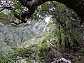 Arthur's Pass National Park 10.JPG