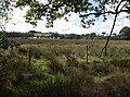 Ash Moor - geograph.org.uk - 577221.jpg