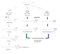 Atypical Sphingolipid Synthesis Pathway.png