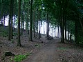 Auf einem Waldweg - panoramio.jpg