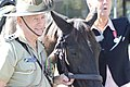 Australian soldier and horse.jpg
