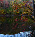 Autumn-leaves-lake-reflections - West Virginia - ForestWander.jpg