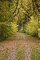 Autumn 2012 (8170199435).jpg