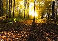 Autumn light (21865120653).jpg