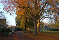 Autumnal Sutton Green, SUTTON, Surrey, Greater London (5).jpg