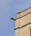 Avignon - Notre Dame des Doms 7.JPG