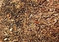 Bûchettes de chauffage sciure et marc de café Heating sticks sawdust coffee grounds 2018 03.jpg