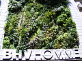 BHV Homme Facade vegetalisee.jpg