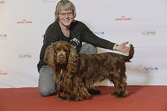 BIR Grupp 8- SUSSEX SPANIEL, Marquell Replay (23904083019).jpg