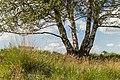 Balloërveld, natuurgebied in Drenthe 023.jpg