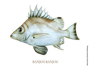Description de l'image Banjofisch.jpg.