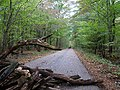 Barrier in the Hambach forest 01.jpg