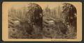 Bartlett Springs, Northern Cal, by Bonine, R. (Robert K.).png