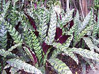 Batik leaves1.jpg