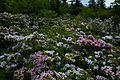 Beautiful-field-flowers-wv - West Virginia - ForestWander.jpg