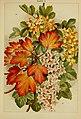 Beautiful flowering trees and shrubs for British and Irish gardens (1903) (20364874821).jpg