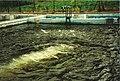 Beecraigs fish farm - geograph.org.uk - 249163.jpg