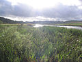 Bemersyde Moss Nature Reserve - geograph.org.uk - 232624.jpg