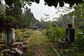 Bhesaj Udyan - Agri-Horticultural Society of India - Alipore - Kolkata 2013-01-05 2305.JPG