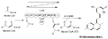 Biosíntesis de la dihidromonacolina L.png