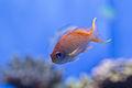 Birch Aquarium7.jpg