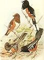 Bird lore (1912) (14564141680).jpg
