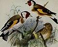Birds of Britain (1907) (14752233361).jpg