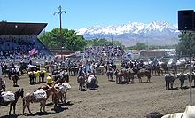 photo of the Bishop Mule Days