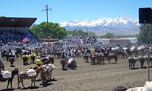 Bishop Mule Days - Participants in the Bishop Mule Days stand for the Star Spangled Banner, with the Sierra Nevada in the background.