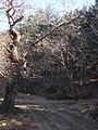 Bivio per il Monte Camurcina - panoramio.jpg