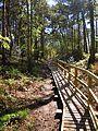 Boardwalk in Pretty Corner Woods 12 May 2012.JPG