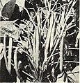 Bolgiano's spring 1967 catalog (1967) (20203184008).jpg