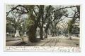 Bonaventure Cemetery, Savannah, Ga (NYPL b12647398-62417).tiff