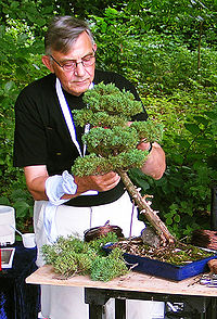 Bonsai-ajustment.jpg