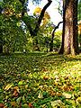 Botanička bašta Jevremovac, Beograd - Botanička bašta Jevremovac, Beograd - jesenje boje, svetlost i senke 03.jpg