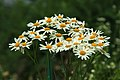 Botanic garden (7462757408).jpg