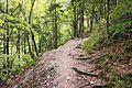 Bovec - trail.jpg