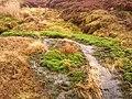 Bowland Forest High BB7, UK - panoramio (11).jpg