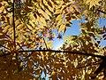 Boyce Thompson Arboretum, Superior, Arizona - panoramio (28).jpg