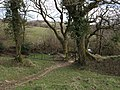 Bratton Clovelly Bridleway 6 - geograph.org.uk - 373859.jpg