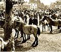 Breton horses 1900.jpg