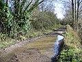 Bridleway, Bleet - geograph.org.uk - 1585978.jpg